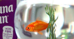 Kelloggs_goldfish