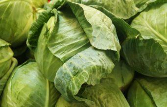 leaf-food-green